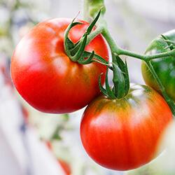 トマトハウス栽培のしくみ