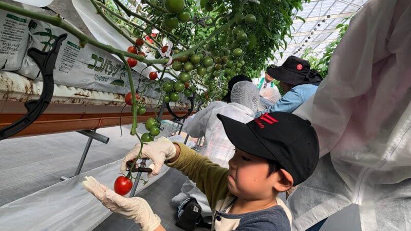 トマト農園にて、おしごと体験スクールを開催しました。