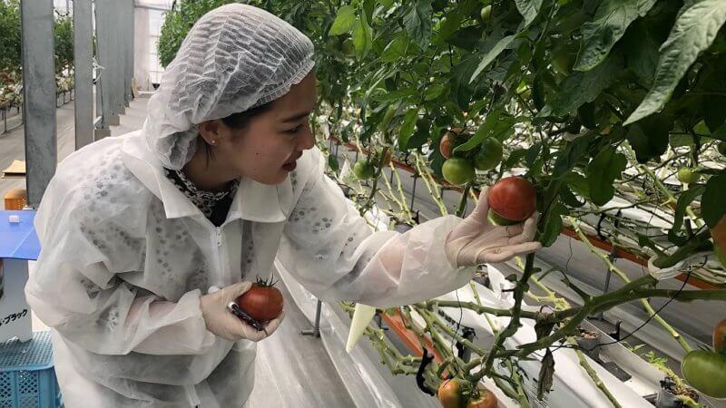 トマト農園で西鉄の新入社員研修を実施しました
